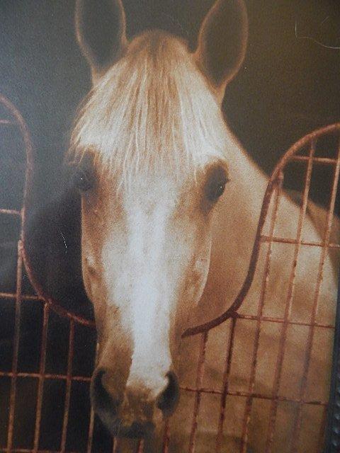 SUSAN FREIDMAN HORSE PHOTOGRAPY