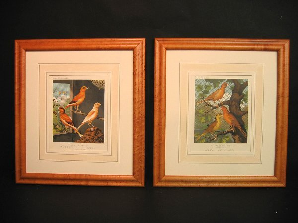 10: Decorative antique prints of canaries
