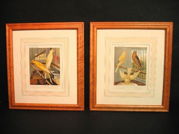 11: Decorative antique prints of canaries