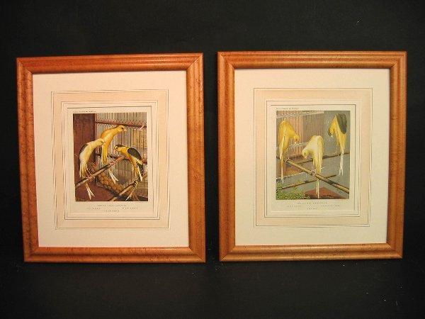 12: Decorative art prints of canaries