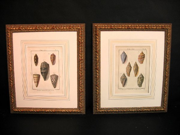 13: Decorative art prints of shells