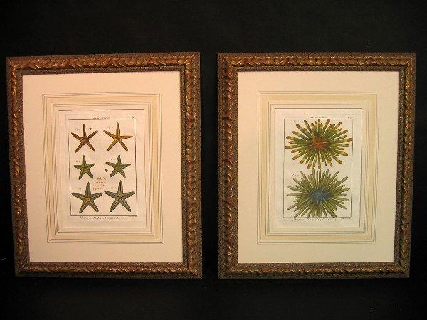 14: Decorative antique prints of shells