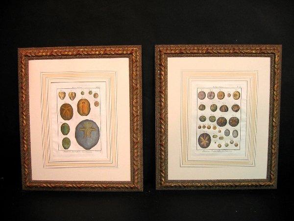 15: Decorative art prints of sea urchins