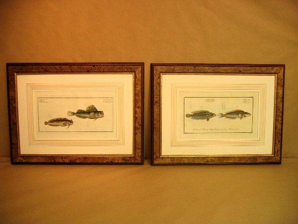 16: Decorative antique prints of fish