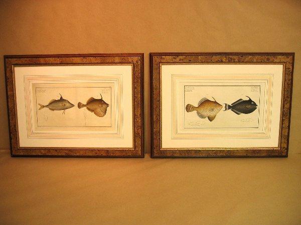 18: Decorative art prints of fish