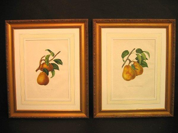 40: Decorative antique prints of  fruit