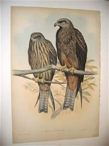 1001: Birds of Asia by John Gould