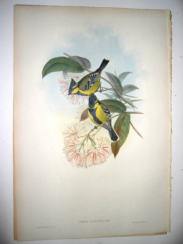 1002: Birds of Asia by John Gould