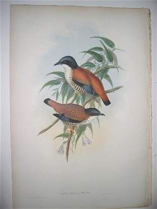 1003: Birds of Asia by John Gould
