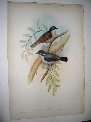1004: Birds of Asia by John Gould