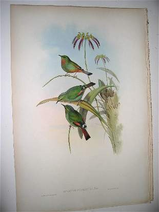 1008: Birds of Asia by John Gould
