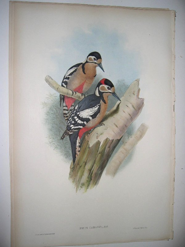 1009: Birds of Asia by John Gould
