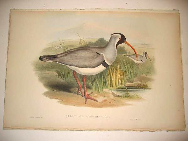 1010: Birds of Asia by John Gould