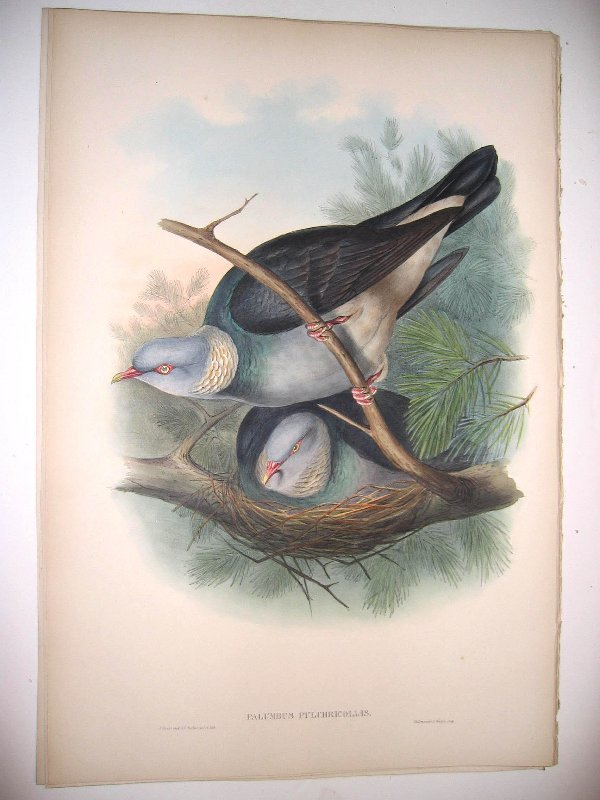 1011: Birds of Asia by John Gould
