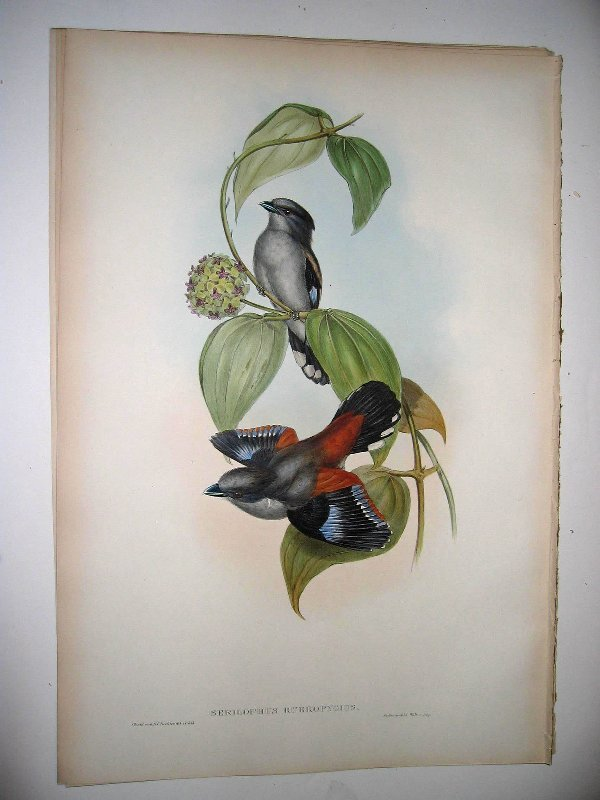 1012: Birds of Asia by John Gould