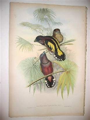 1013: Birds of Asia by John Gould