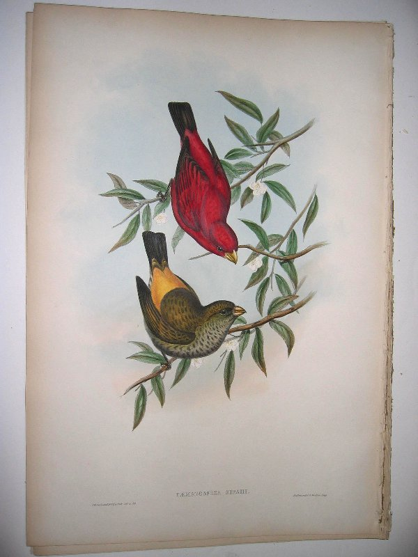 1015: Birds of Asia by John Gould