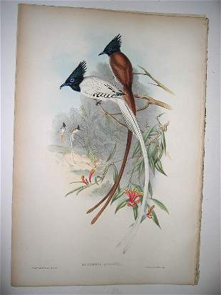 1017: Birds of Asia by John Gould