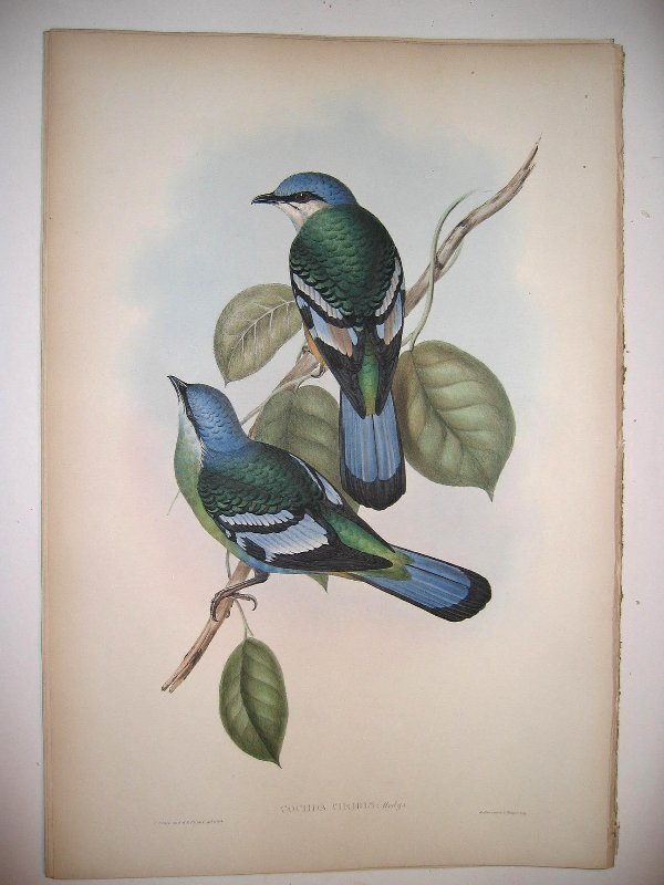1019: Birds of Asia by John Gould
