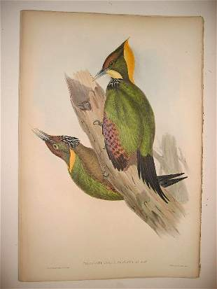 1020: Birds of Asia by John Gould