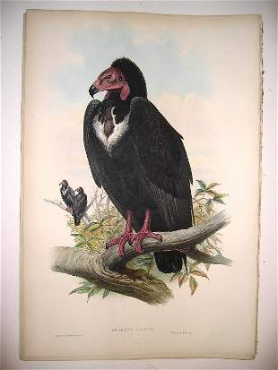 1023: Birds of Asia by John Gould