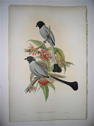 1024: Birds of Asia by John Gould