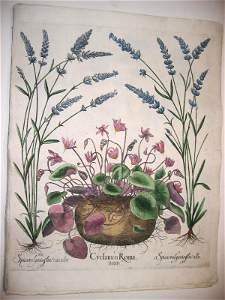 1043: Hand colored engr.of botanicals by Besl