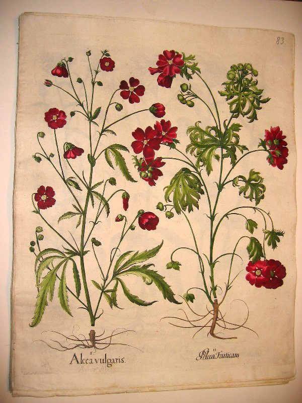 1044: Hand colored engr.of botanicals by Besl