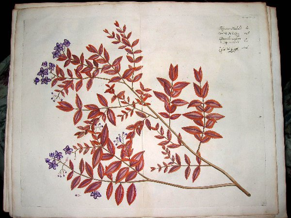 2007: hand color engravings of botanicals