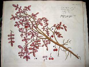 hand color engravings of botanicals