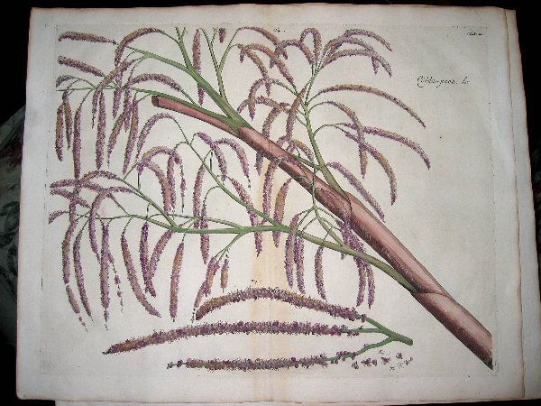 2010: hand color engravings of botanicals