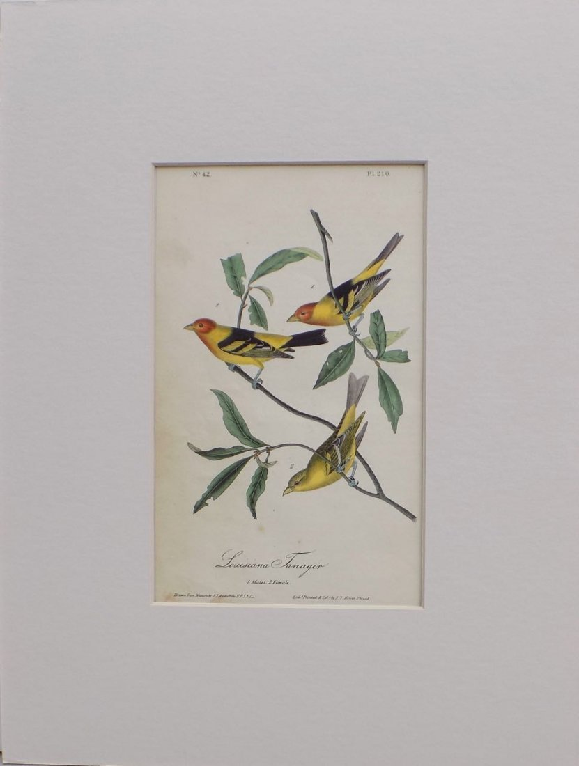 Audubon's Louisiana Tanager, 1840