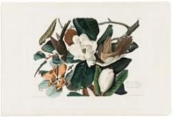AUDUBON, JOHN JAMES. Black-Billed Cuckoo. Plate 32.