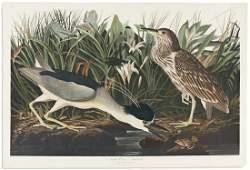 AUDUBON, JOHN JAMES. Night Heron or Qua Bird. Plate