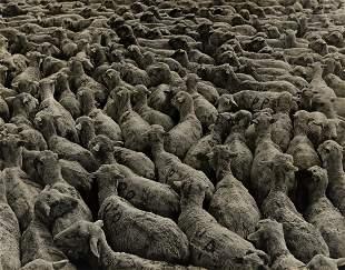 ARTHUR ROTHSTEIN (1915-1985) Bellefield, ND (sheep).