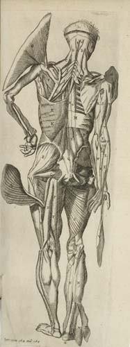 2052025: BARTHOLIN, THOMAS.  1668  Bartholinus Anatomy.