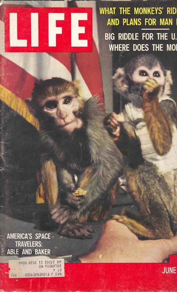 1: 1959&1961 Life Magazines NASA Chimps Able Baker Ham