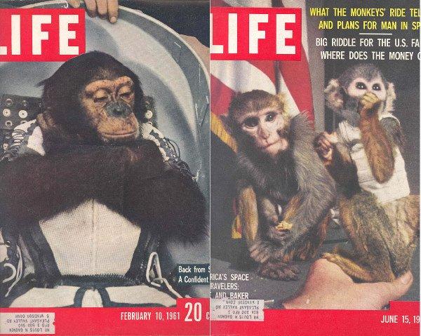 2: 1959&1961 Life Magazines NASA Chimps Able Baker Ham
