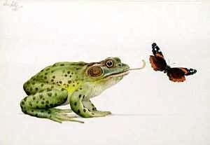 Ken Lilly, 'Bull frog' watercolour 18 x