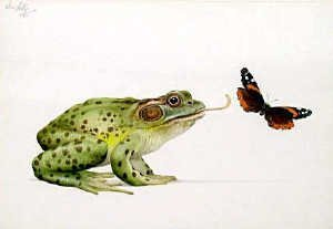 21: Ken Lilly,  'Bull frog' watercolour 18 x