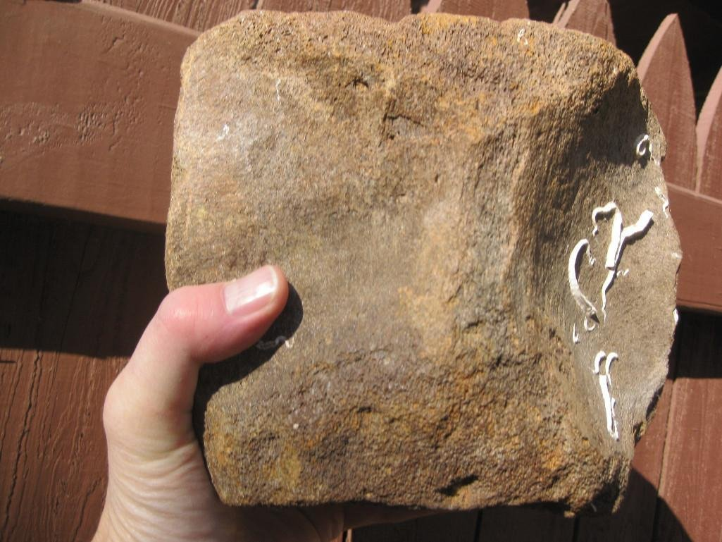 Fossil Whale Vertebrae and Megalodon shark tooth - 10