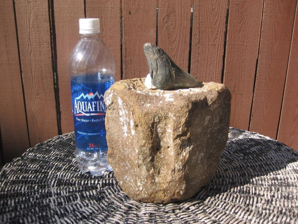 Fossil Whale Vertebrae and Megalodon shark tooth - 2