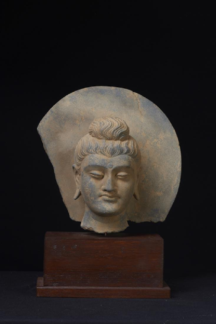 A Large Life Size Gandharan Buddha Head With Halo