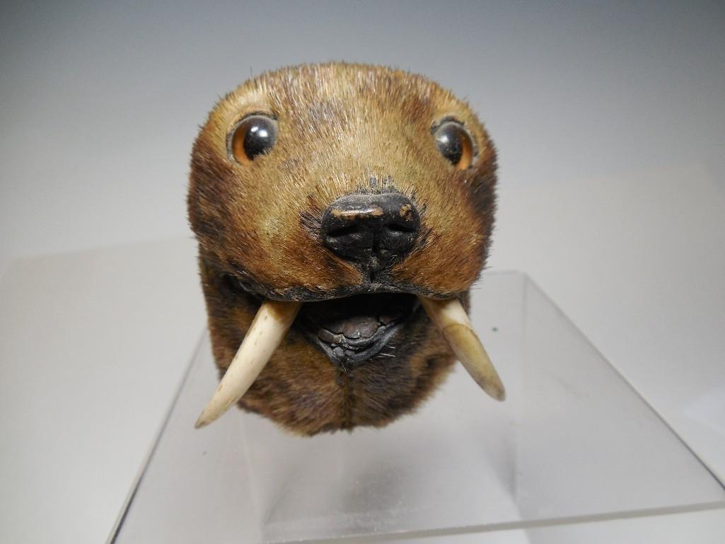 Ext Unusual Seal Head Inkwell w/Tusks - 19th century