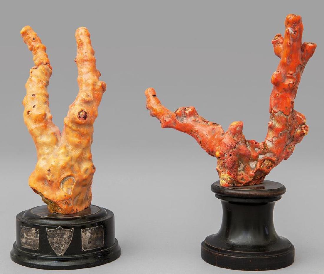 Due rami di corallo, fine sec.XIX h.cm.23