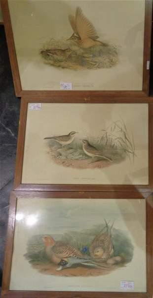 Uccelli quindici stampe