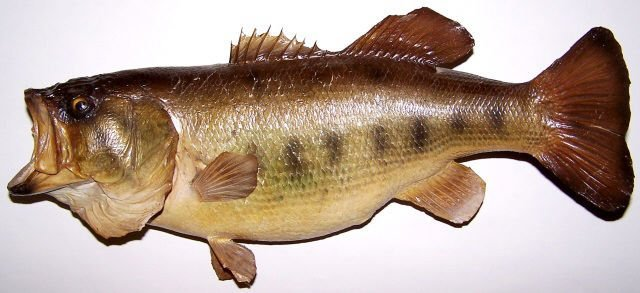 *FULL MOUNT BASS