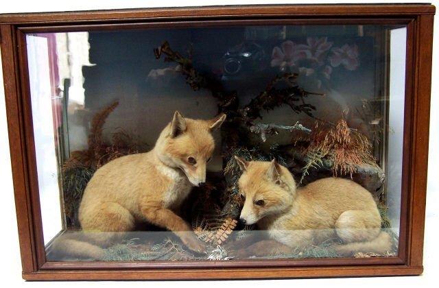 *PAIR OF FOX CUBS