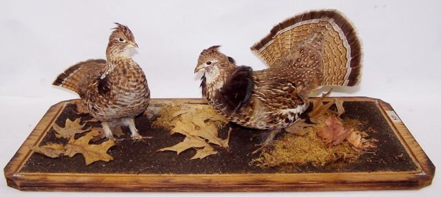 *PAIR OF GROUSE MOUNTS - 2