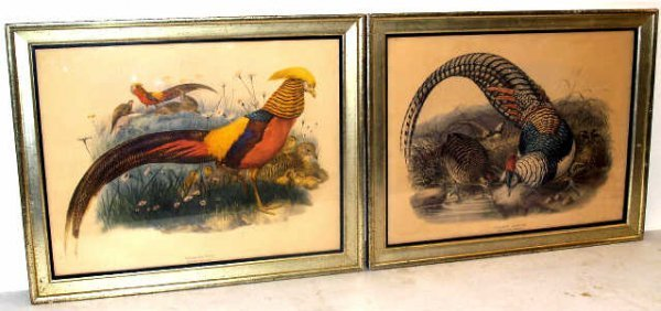 311: TWO HAND COLORED 19th CENTURY BIRD PRINTS